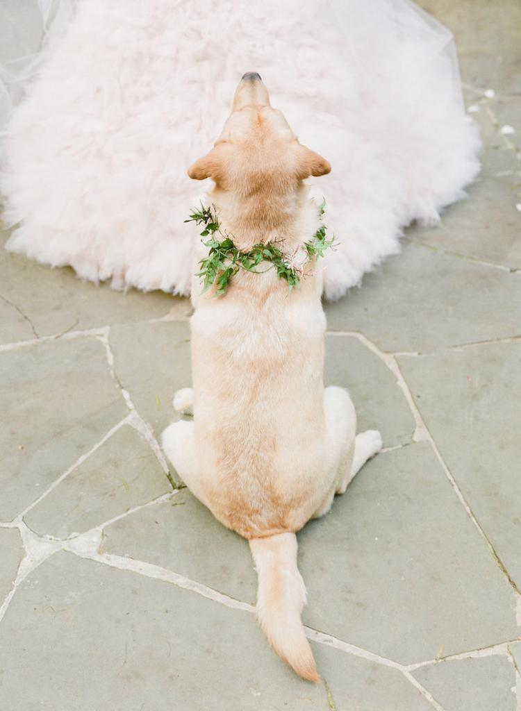 Pup's collar by Gathering Floral + Event Design. Photograph by Corbin Gurkin.
