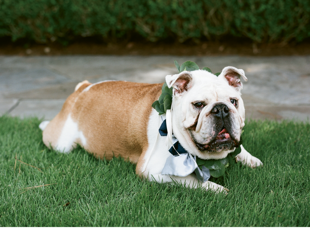 Bambino, the couple's bulldog, served as ring bearer.