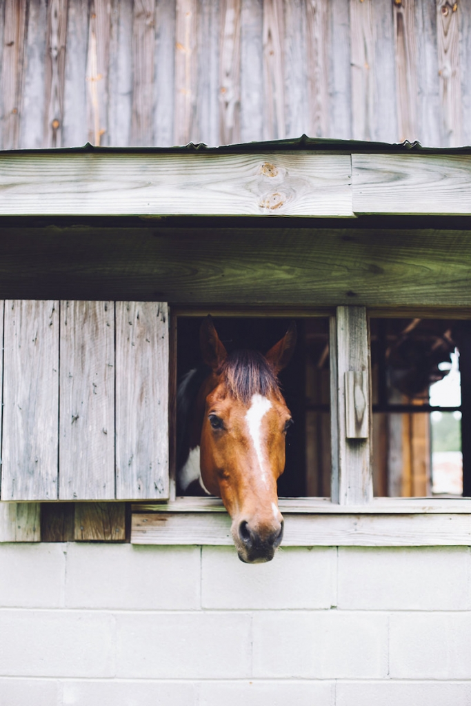 Image by Monika Gauthier Photography & Design at The Stables at Boals Farm.