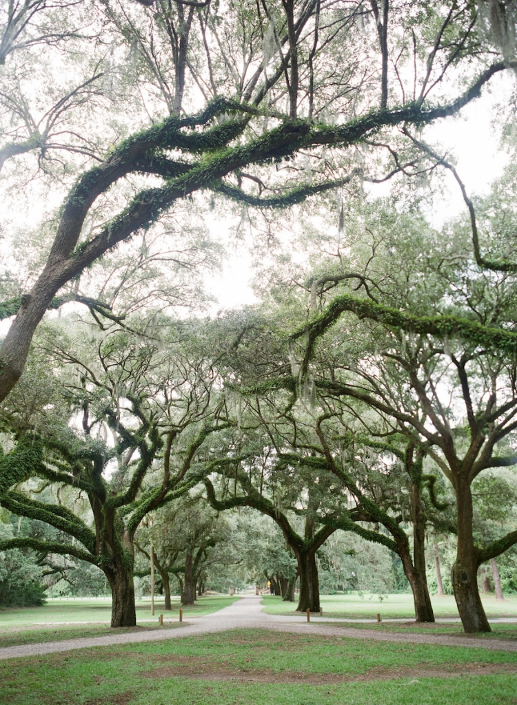 The oak allee at McLeod Plantation Historic Site. Photograph by Corbin Gurkin.