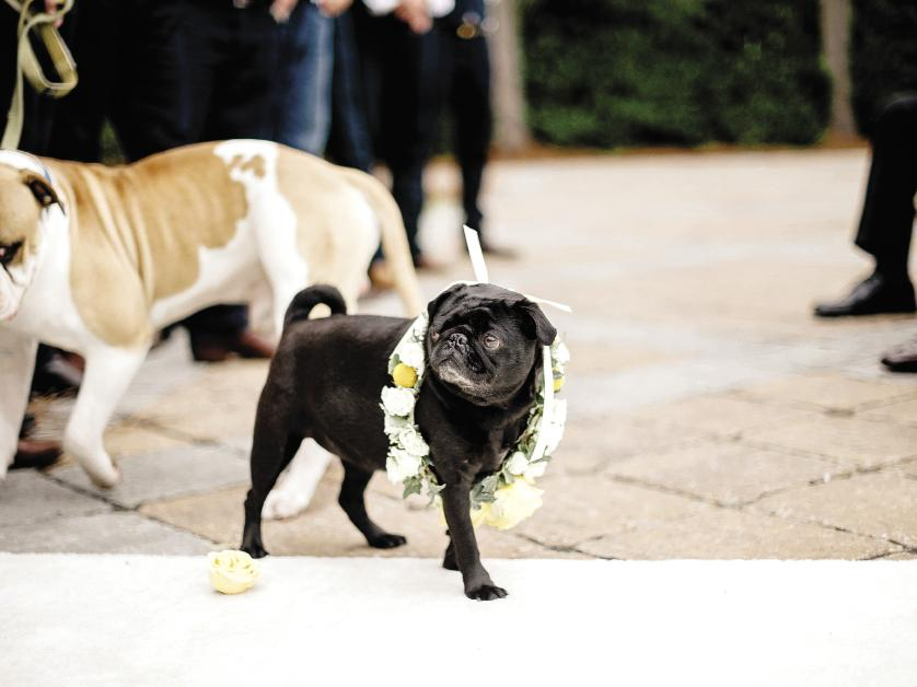 DOG DAYS: The backyard locale meant Katie's pug, Posey, could wander as she wished.