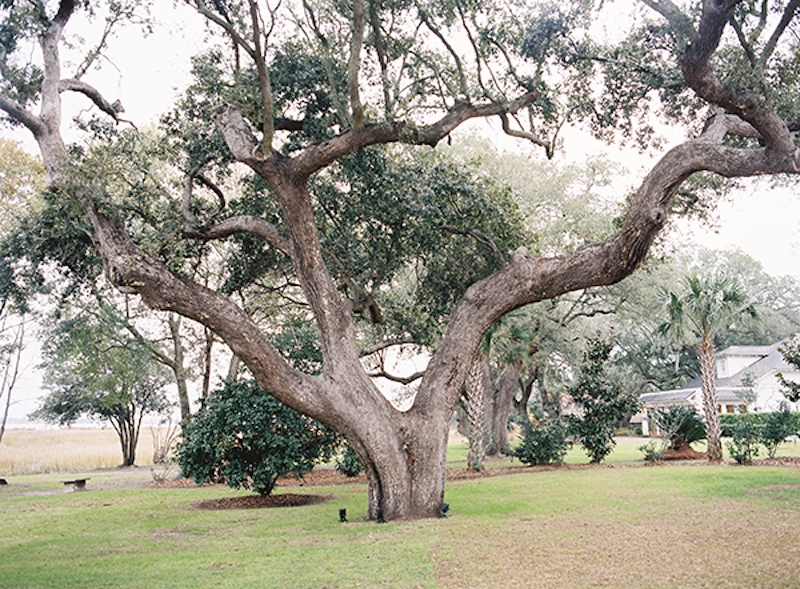 Image by Virgil Bunao Photography at Lowndes Grove Plantation.