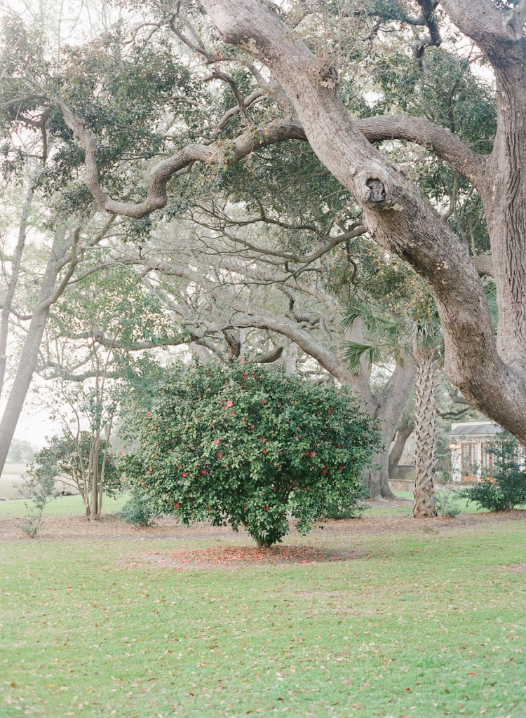 Photograph by Corbin Gurkin at Lowndes Grove Plantation.