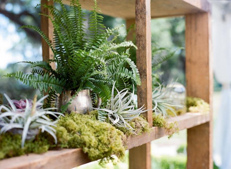 Succulents from Out of the Garden. Barback from Ooh! Events. Photograph by Marni Rothschild Pictures.