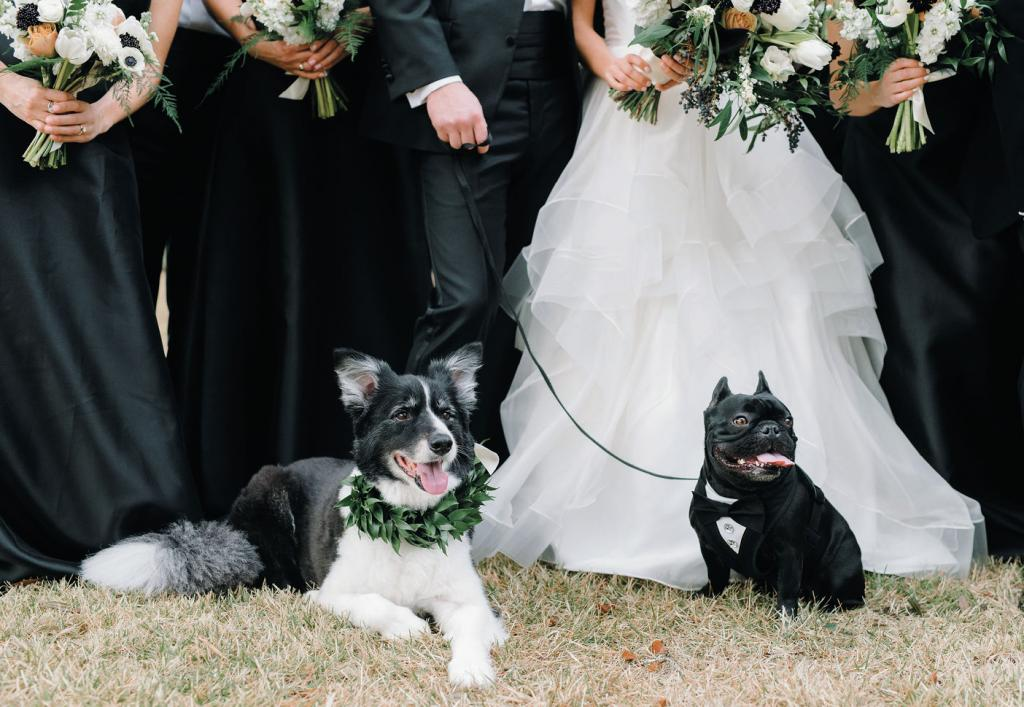 "The resort is dog-friendly, so both Hendrix (the border collie, and the couple's ""fur nephew"") and Sullivan, Alexa and William's three-and-a-half-year-old French Bulldog, were welcome."