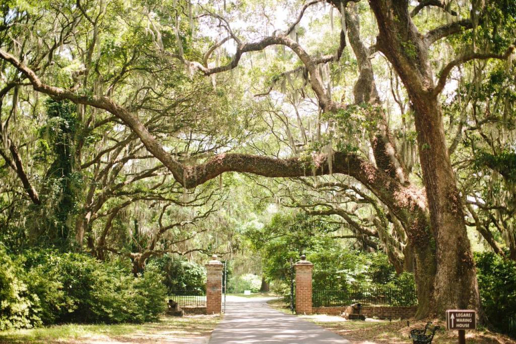 Photograph by Juliet Elizabeth at Charleston Towne Landing.
