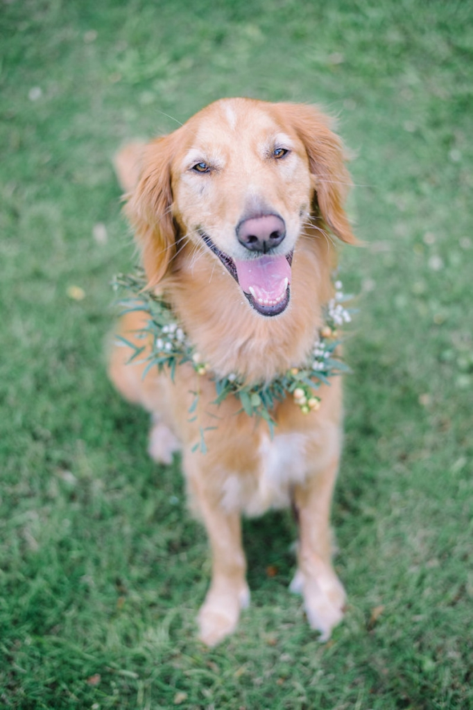 Image by Aaron & Jillian Photography. Floral dog collar by Wildflowers Inc.