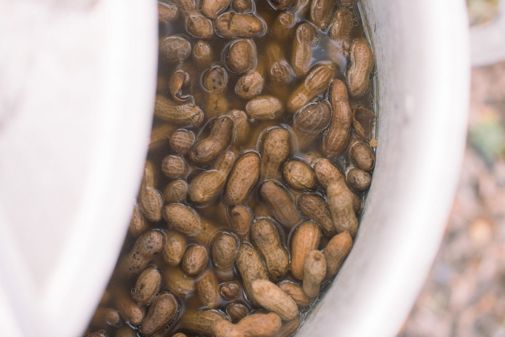 Boiled peanuts. (Photo by Tim Will)