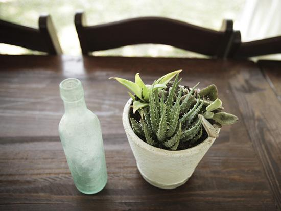 CLASSIC TRIMMINGS: Cloudy tincture bottles and succulent arrangements dressed up the wooden tables with organic charm.